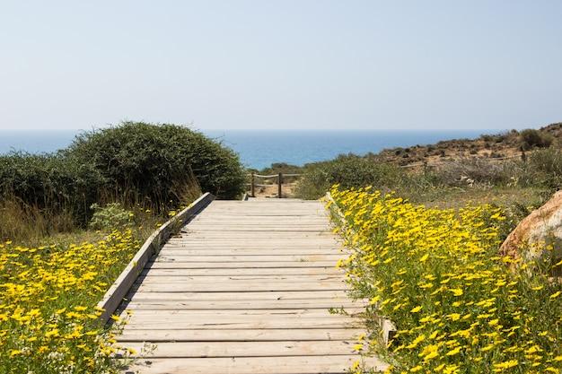 Um caminho de madeira em direção à praia, rodeado por flores amarelas