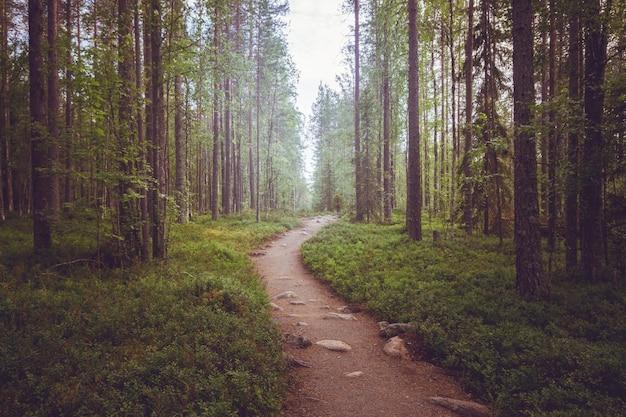 Um caminho em uma floresta de fadas no crepúsculo com luz mística e neblina à distância