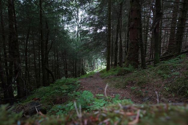 Um caminho em uma floresta densa com musgo e samambaias