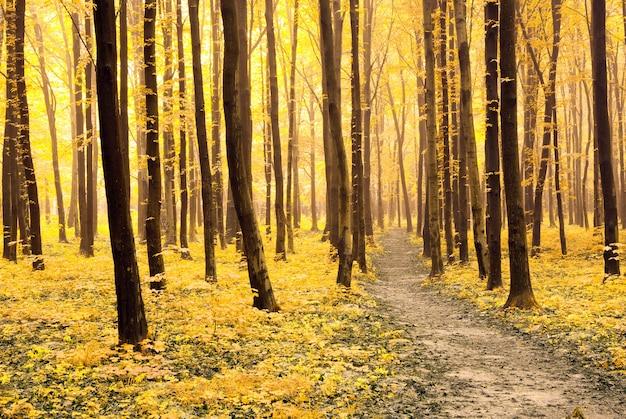 Um caminho está na floresta de outono