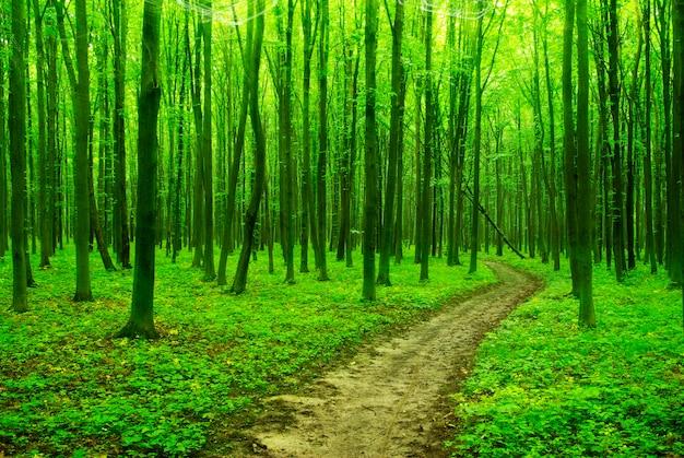 Um caminho está na floresta verde