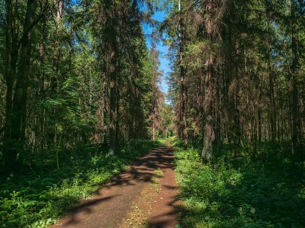 Um caminho estreito através de uma floresta densa