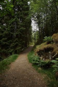 Um caminho na floresta com samambaias e clareiras.