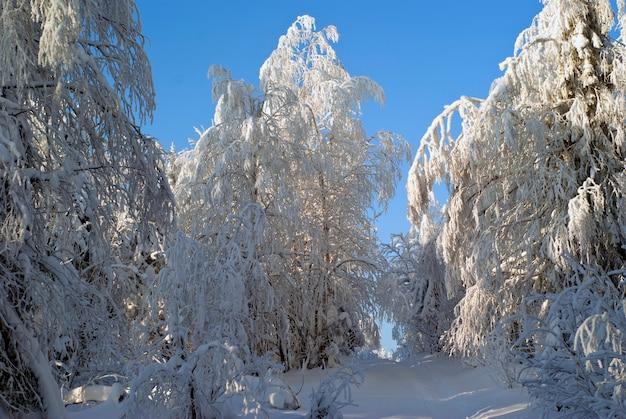Um caminho na neve profunda através de uma floresta gelada de inverno com árvores cobertas de neve contra um céu claro