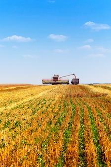 Um campo agrícola no qual realizam a limpeza do trigo