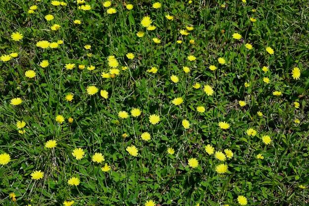 Um campo com uma variedade de flores silvestres e grama verde em todo o quadro.