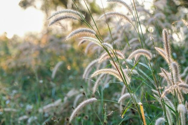 Um campo de grama
