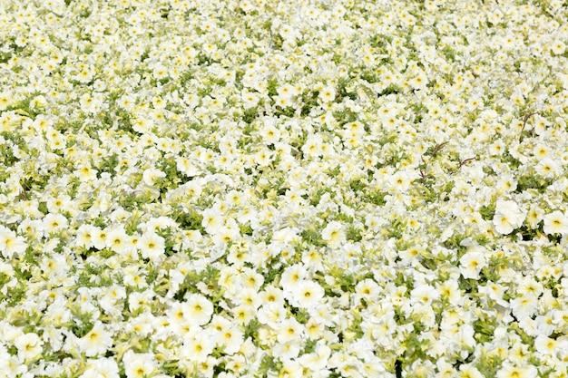 Um campo de pequenas flores brancas e amarelas