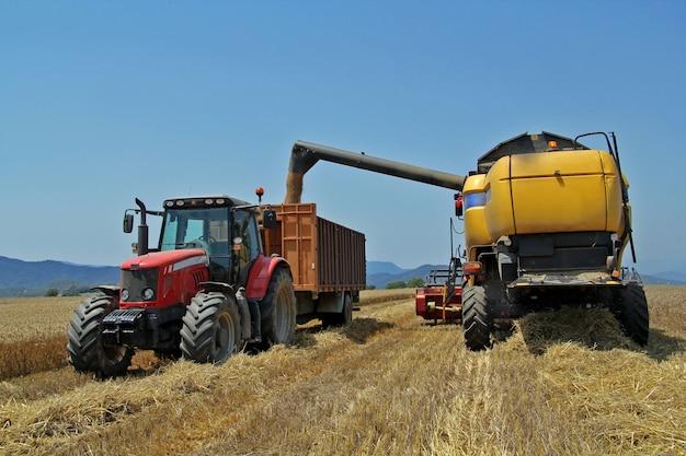 Um, campo trigo, em, verão, colheita, um, trator, i, harvester