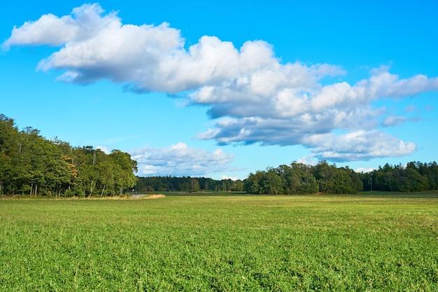 Um campo verde sob um céu azul com nuvens.