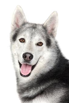 Um cão adorável sobre fundo branco
