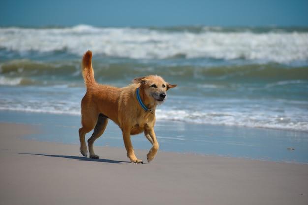 Um cão alegre corre no mar. praia selvagem vendendo cachorro.