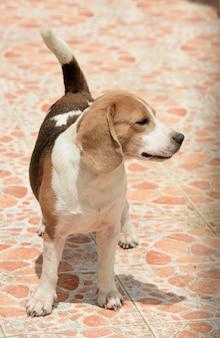 Um cão bonito preso atrás de uma porta de aço. muitos cachorros fofos.
