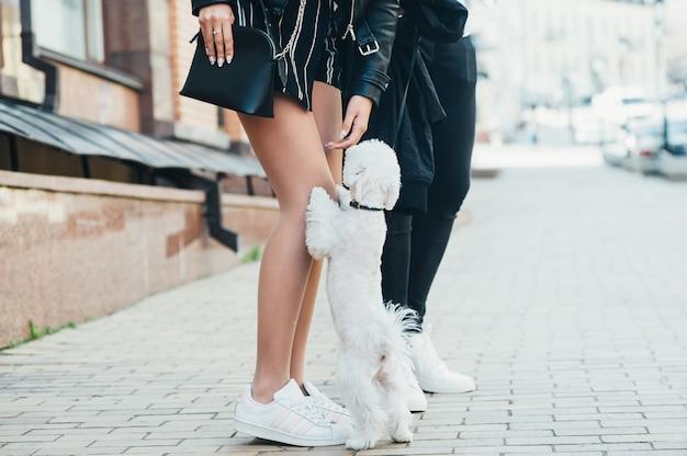 Um cão branco pequeno bonito e pernas de um jovem casal, na rua