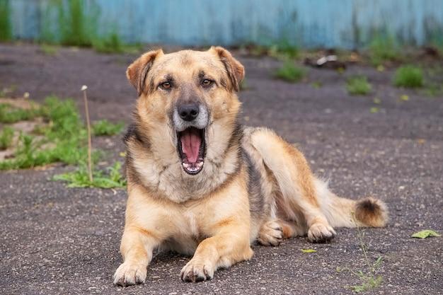 Um cão com a boca aberta está deitado no asfalto
