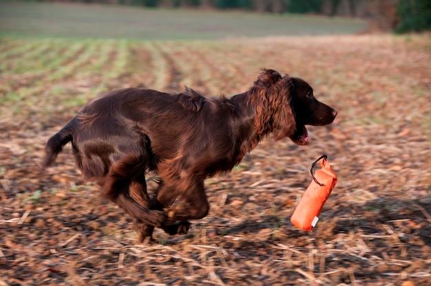 Um cão com um brinquedo de mastigar
