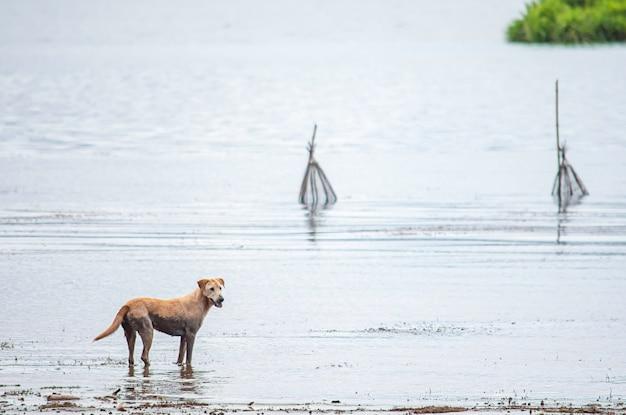Um cão com um solo de lama na água