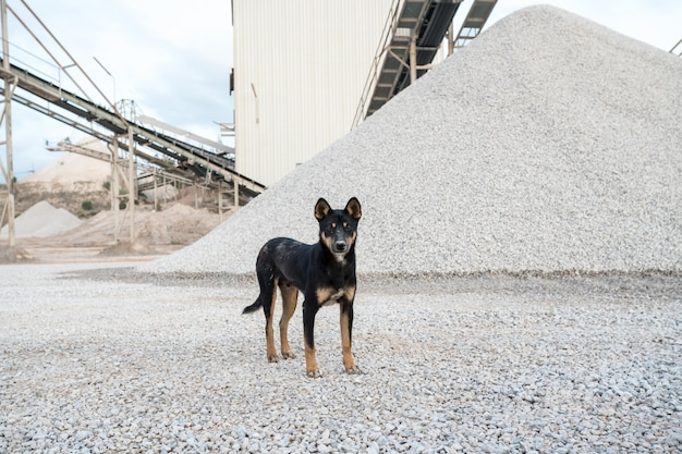 Um cão de fábrica de concreto