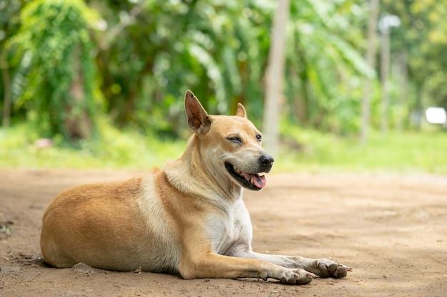 Um cão desabrigado à espera de comida de pessoas.