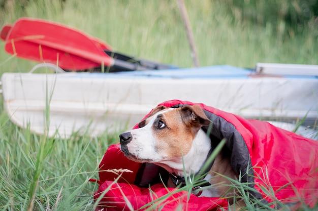 Um cão descansa em um saco de dormir na frente de um barco de canoa no parque de campismo.