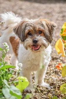 Um, cão, é, olhando câmera, e, ficar, em, jardim