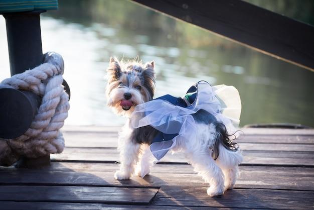 Um cão em roupas elegantes para um passeio no cais.