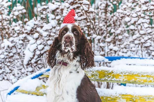 Um cão em um boné vermelho na cabeça se senta em um banco em um inverno nevado