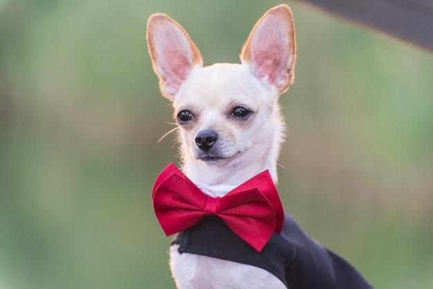 Um cão em um vestido de noiva