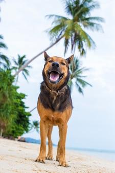 Um cão feliz na praia.