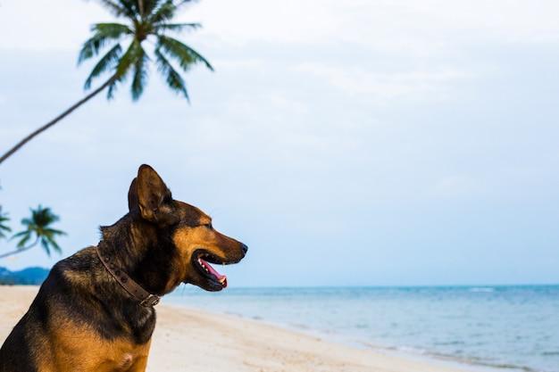 Um cão feliz que relaxa na praia.