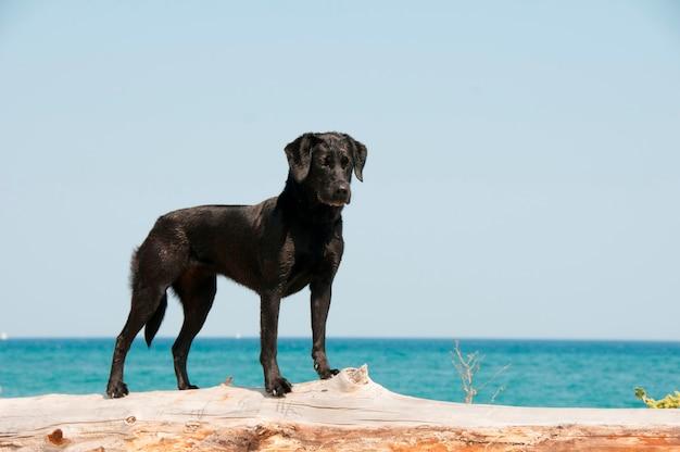 Um, cão, levantando praia