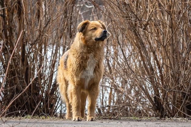 Um cão na natureza