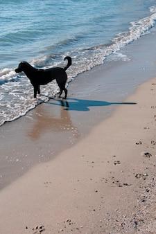 Um cão na praia