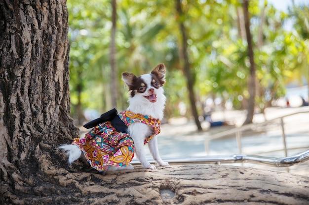 Um cão pequeno que está e que joga na árvore grande com na praia na província de phuket em tailândia.