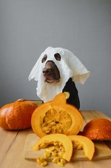 Um cão retriever em uma máscara fantasma e abóbora conceito de outono roupa de halloween com uma abóbora