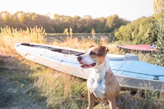Um cão senta-se na frente de barcos de canoa na bela luz da noite