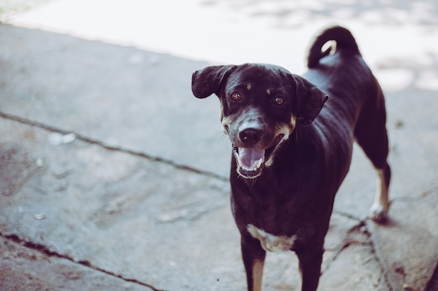 Um cão vadio, sozinho a vida à espera de comida. o cão disperso desabrigado abandonado está encontrando-se na rua. cão abandonado triste pequeno no passeio.
