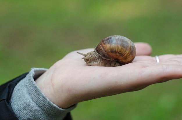 Um caracol na mão da criança sobre a natureza verde