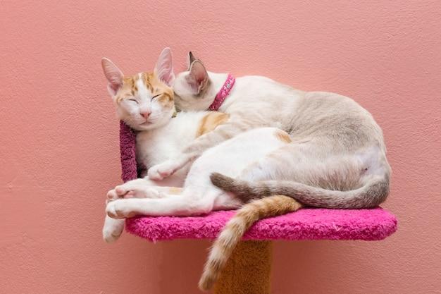 Um casal de gatos dormindo e abraçando na cama