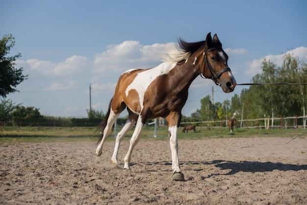 Um cavalo bonito e bem cuidado em uma fazenda. rancho. agricultor. vaqueiro.