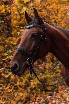 Um cavalo caminhando na floresta de outono