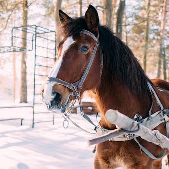 Um cavalo em um arnês à luz do sol na neve