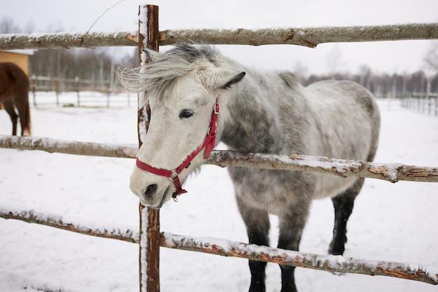 Um cavalo está em um paddock em uma fazenda