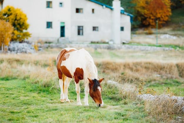 Um cavalo marrom-branco caminha em um prado sob a luz do sol