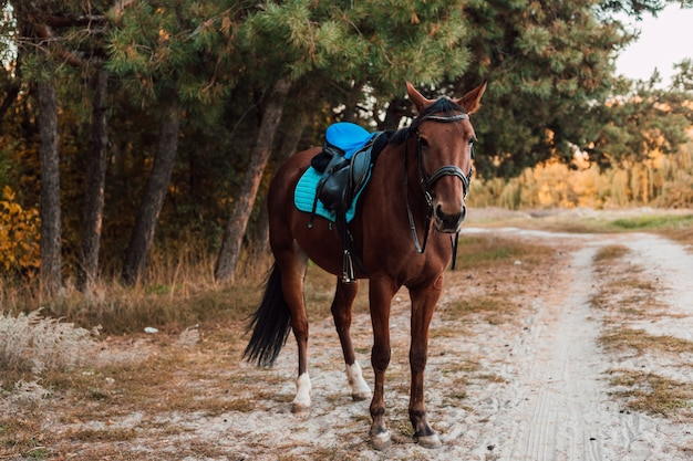 Um cavalo marrom caminhando na floresta de outono