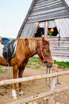 Um cavalo marrom em um paddock perto de uma casa de madeira