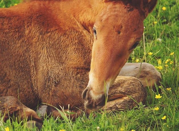 Um cavalo na grama, horário de verão