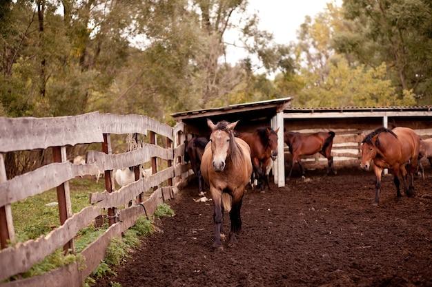 Um cavalo parado perto de uma velha cerca de madeira em uma fazenda de cavalos