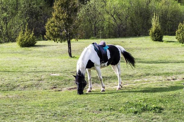 Um cavalo preto e branco com uma sela de grama em um prado verde
