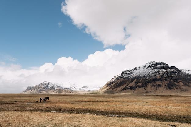Um cavalo solitário está caminhando sozinho em um campo contra o pano de fundo de montanhas rochosas com neve